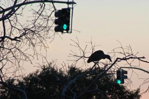 Heron Bayou St John New Orleans Louisiana